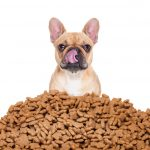 Storage of dry food – storing Royal Canin Dry Food right