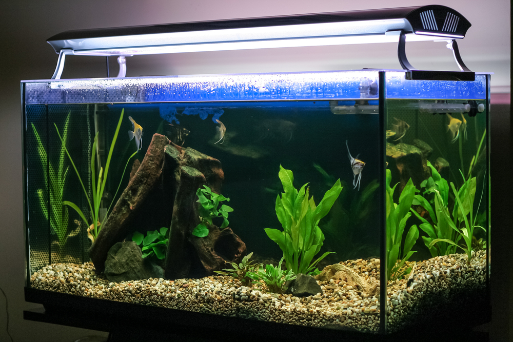 some rules for choosing the right aquariums