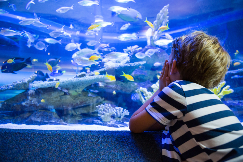 The right fish population for aquariums