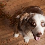 Should you soak a dry food for dogs?
